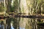 Rzeki Podlasia